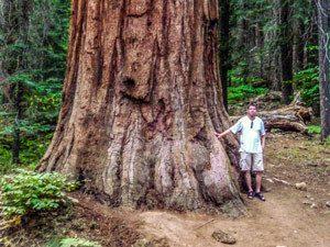 Baum K.P. Muth